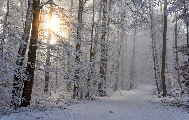 "alt=""winter season of life"""
